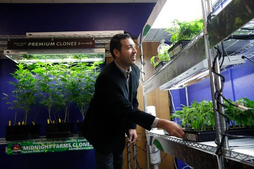 (AP Photo/Marcio Jose Sanchez). In this Dec. 29, 2017, photo, Khalil Moutawakkil, co-founder and CEO of KindPeoples, a marijuana dispensary, looks at different marijuana plants on display in his store in Santa Cruz, Calif.