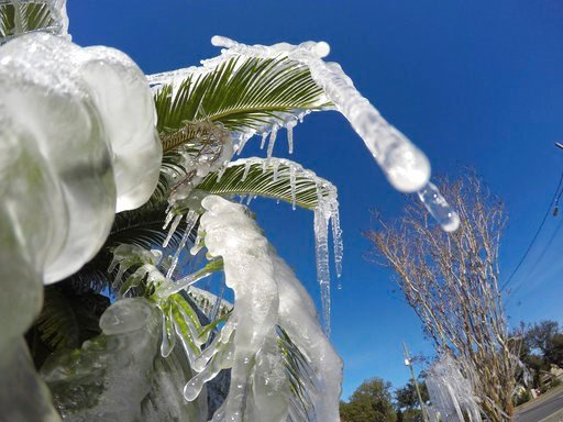 (Nick Tomecek/Northwest Florida Daily News via AP). Water is frozen on a tree in Fort Walton Beach, Fla., on Tuesday Jan. 2, 2018 after a resident left his sprinklers on. Temperatures are expected to stay below freezing at night for the Panhandle throu...