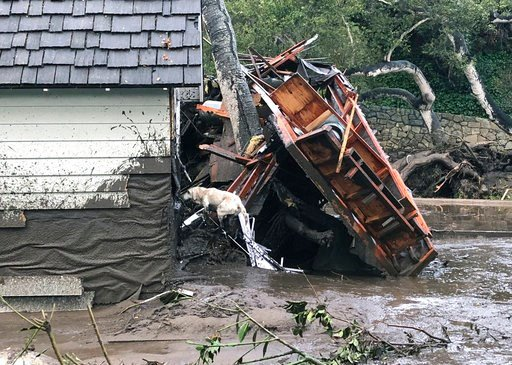 (Mike Eliason/Santa Barbara County Fire Department via AP). In this photo provided by Santa Barbara County Fire Department, Santa Barbara County Fire Search Dog Reilly looks for victims in damaged and destroyed homes in Montecito, Calif. following dead...