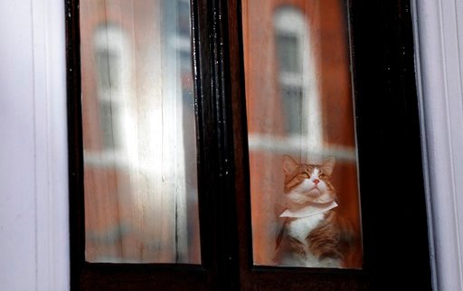 (AP Photo/Frank Augstein). A cat, believed to be Wiki Leaks founder Julian Assange's cat, wears a tie as it looks out of a window at the Ecuadorian embassy in London, Tuesday, Feb. 6, 2018. Lawyers for Julian Assange are asking a British court to drop ...