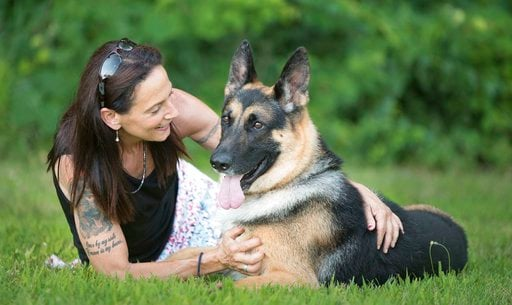(Kenneth Beatty/Sue Condreras via AP). In this 2017 image provided by Sue Condreras,  Fanucci, a German shepherd, poses with handler Sue Condreras last summer in upstate New York. Fanucci's right rear leg was shattered in a van accident in 2014.