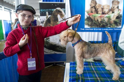 (AP Photo/Mary Altaffer). In this Saturday, Feb. 10, 2018, photo, Fenric Towell poses for a photo with his lakeland terrier Missy during the meet the breeds companion event to the Westminster Kennel Club Dog Show in New York.