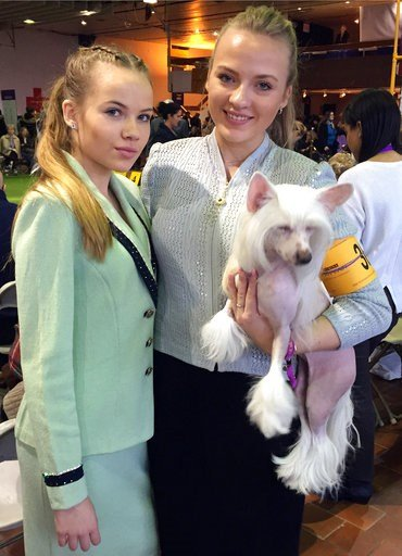 (AP Photo/Jennifer Peltz). Dog handlers Maren LaPlante, 13, left, and her sister Erin LaPlante, 17, of Caledonia, Wis., pose with Thandy, a Chinese crested, at the Westminster Kennel Club dog show, Monday, Feb. 12, 2018 in New York. There's no age mini...