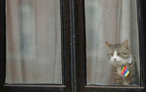 (AP Photo/Alastair Grant). A cat, believed to be owned by Wiki Leaks founder Julian Assange, wears a tie as it looks out of a window at the Ecuadorian embassy in London, Tuesday, Feb. 13, 2018. A British judge is set to decide Tuesday whether to quash ...