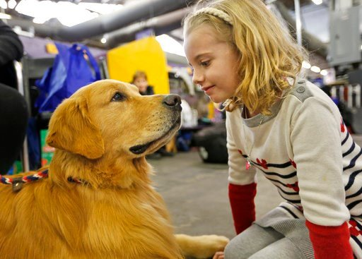 (AP Photo/Seth Wenig). Evangeline Wendt, 7, right, visits with a golden retriever named Tank during the 142nd Westminster Kennel Club Dog Show in New York, Tuesday, Feb. 13, 2018.