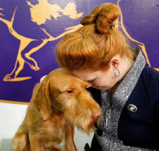 (AP Photo/Seth Wenig). Kacie Davis lays her head on a Wirehaired Vizla named Durham during the 142nd Westminster Kennel Club Dog Show in New York, Tuesday, Feb. 13, 2018.