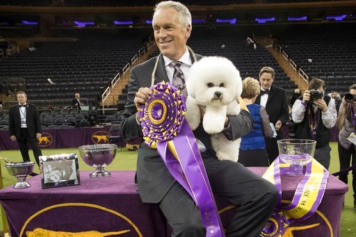 (AP Photo/Mary Altaffer). Handler Bill McFadden poses for photos with Flynn, a bichon frise, after Flynn won best in show during the 142nd Westminster Kennel Club Dog Show, Tuesday, Feb. 13, 2018, at Madison Square Garden in New York.