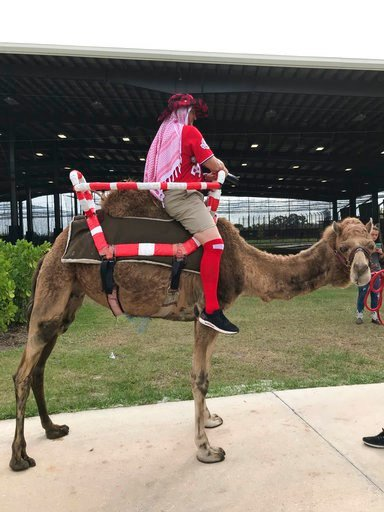 (Jorge Castillo/The Washington Post via AP). One of three camels that Washington Nationals manager Dave Martinez had brought to baseball spring training stands on a sidewalk in West Palm Beach, Fla., Wednesday, Feb. 28, 2018. Martinez joined players fo...