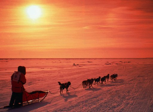 (AP Photo/Al Grillo, File). FILE - In this March 1996, file photo, a musher drives his team across the frozen Norton Sound near Nome, Alaska, during the Iditarod Trail Sled Dog Race. The 46th running of Alaska's famed Iditarod Trail Sled Dog Race kicks...