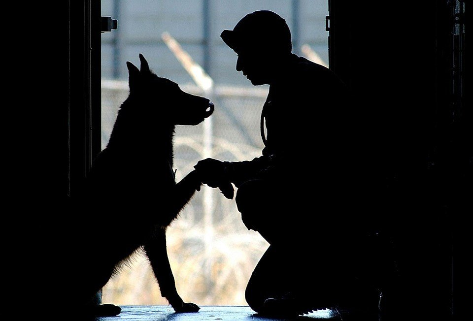 The Defense Department's inspector general has determined that, after the program ended in 2014, some soldiers struggled or were unable to adopt the dogs they had handled. (Source: Pixabay)
