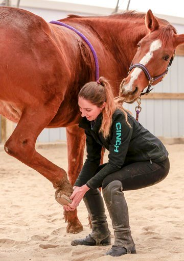 (AP Photo/Nati Harnik). In this March 1, 2018 photo, Jane Fucinaro works with 9-year-old Wakema during an equine body work session in Blair, Neb. A bill introduced by Nebraska state Sen. Mike Groene of North Platte, proposes to exempt equine massage pr...
