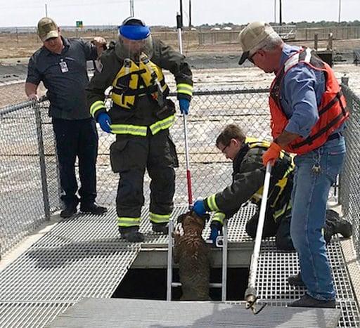 (Brad Davidson/Pueblo West Fire Department via AP). This Monday, May 7, 2018, photo provided by the Pueblo West Fire Department shows Gidget, an English mastiff belonging to Mandi Smith, of Pueblo West, Colo., being rescued by Pueblo West Fire Capt. Mi...