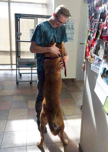 (Gretchen Pressley/Pueblo Animal Services via AP). In this Monday, May 7, 2018 photo provided by Pueblo Animal Services, Henry Smithour, 16, picks up his English mastiff, Gidget, from Pueblo Animal Services in Pueblo, Colo., after the dog was rescued f...
