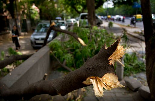 (AP Photo/Manish Swarup). An uprooted tree from Sunday's sudden storm is seen blocking a pathway in New Delhi, India, Monday, May 14, 2018. Powerful wind and rain storms have swept across northern India, with authorities saying many have been killed. M...