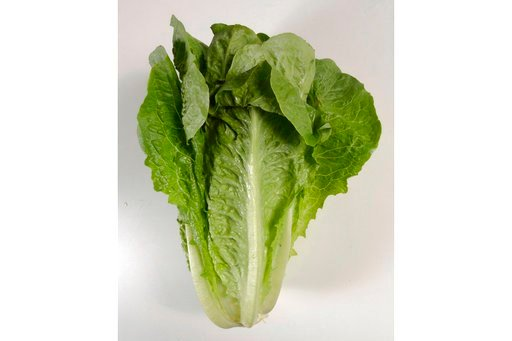 (Steve Campbell/Houston Chronicle via AP). FILE - This undated photo shows romaine lettuce in Houston. On Friday, June 1, 2018, the U.S. Centers for Disease Control and Prevention said four more deaths have been linked to a national romaine lettuce foo...