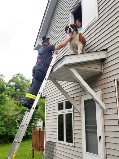 (Anthony Scavo/Spring Lake Park-Blaine-Mounds View Fire Department via AP). This June 8, 2018, photo provided by the Spring Lake Park-Blaine-Mounds View Fire Department, shows firefighter David O'Keeffe helping to rescue a Saint Bernard named Whiskey f...