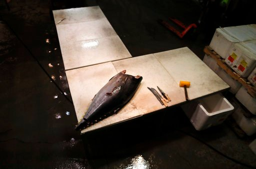 (AP Photo/Julie Jacobson). A tuna imported from South America sits on a table waiting to be filleted at the New Fulton Fish Market in New York on Monday, Jan. 8, 2018. A vast variety of fish species from around the world are offered for sale here, rega...