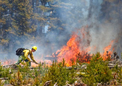 (Hugh Carey/Summit Daily News via AP). A wildland firefighter works to contain the flames at the Buffalo Fire site Wednesday, June 13, 2018, near Silverthorne, Colo. As of 10:45 am Wednesday, the 91 acre fire is 0 percent contained but no homes were da...