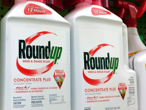 (AP Photo/Reed Saxon, File). FILE - This Jan. 26, 2017, file photo shows containers of Roundup, a weed killer made by Monsanto, on a shelf at a hardware store in Los Angeles. Lawyers for a school groundskeeper dying of cancer asked a San Francisco jury...