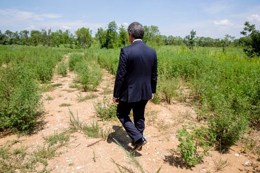 (AP Photo/Karen E. Segrave). In this July 25, 2018, photo, Stephen Bell, president and CEO of the Arkadelphia Area Chamber of Commerce, shows parts of the 900-acre site of what he hopes will be a new paper mill in Arkadelphia, Ark.
