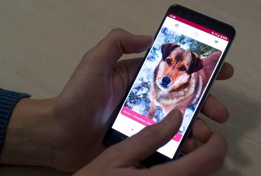 (AP Photo/Mindaugas Kulbis). In this photo taken on Thursday, Jan. 31, 2019, A man looks at a mobile phone app that helps people find dogs in animal shelters in Vilnius, Lithuania. A group of enthusiasts have launched the app that helps match aspiring ...